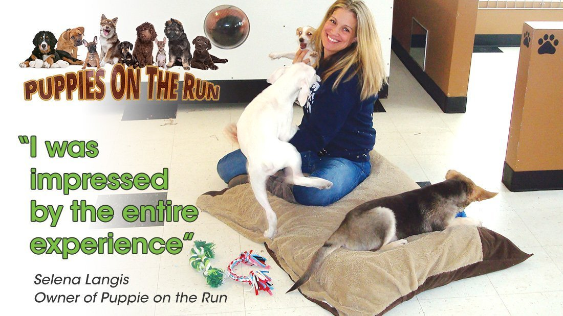 Puppies on the Run in their own words header image